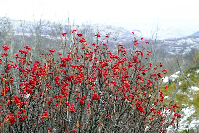 Красные ягоды на фоне гор