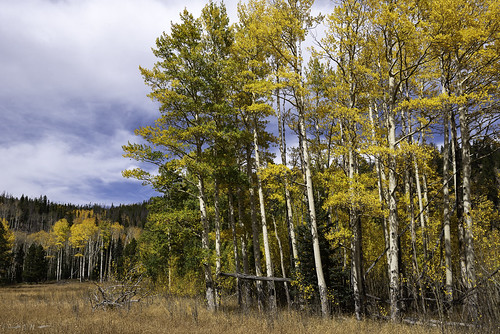 colorado coloradorockies fall landscape populustremuloides rockymountainnationalpark rockymountains southernrockies usnationalpark aspens autumn clouds fallcolor forest highcountry highelevation mountains wilderness