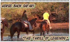 horse back safari