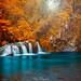 couleur d'automne  langevin  ile de la réunion by olivierhoarau44