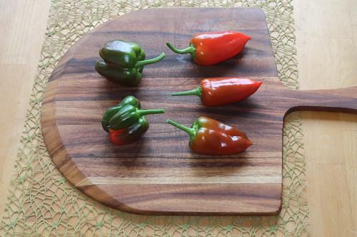 Zwei Gemüsepaprika und 3 Spitzpaprika (gerade geerntet)