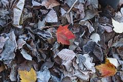 Herbst Variationen