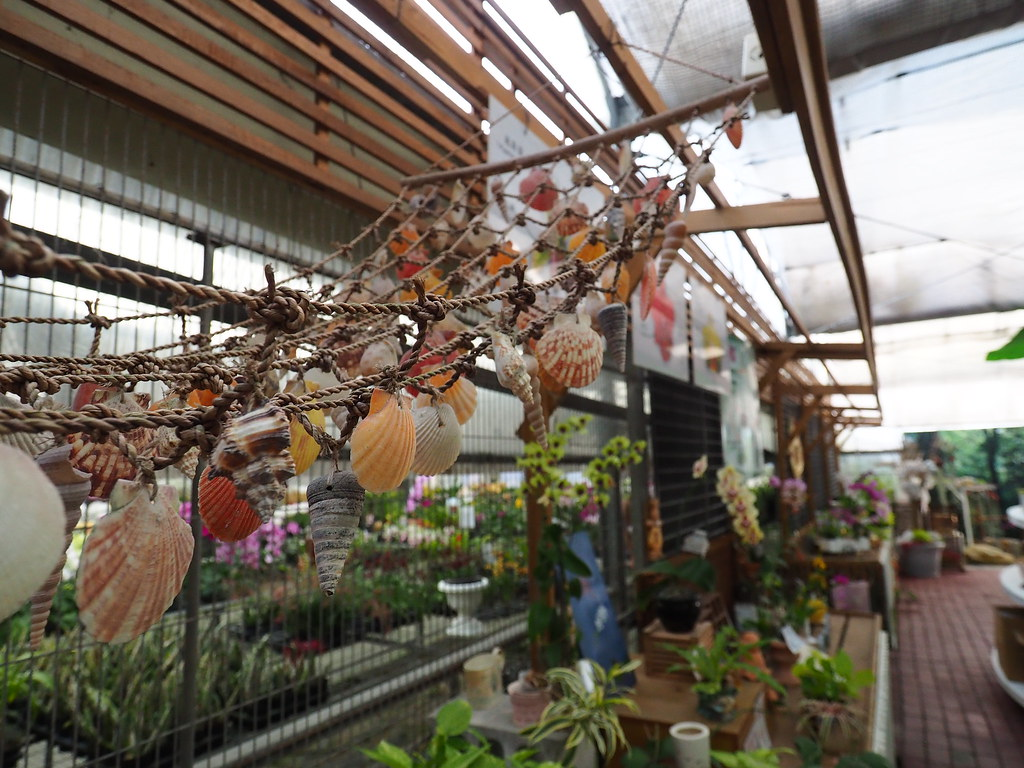 山上蘭科植物園 (10)