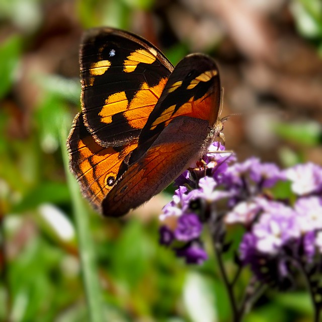 Butterfly   ( Explore ), Fujifilm X-S1