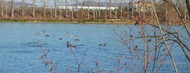 paisible hiver sur le lac