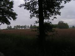 20080515 22943 0905 Jakobus Baum Feld Weite - Photo of Saint-Sixte