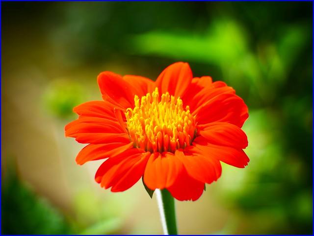 16Jan2019 - flower from, Panasonic DC-GF10, LUMIX G VARIO 45-150mm F4.0-5.6
