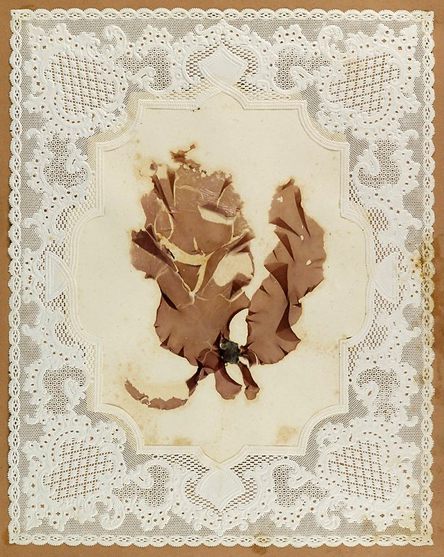 001-Album de algas marinas-1848- Brooklyn Museum Library
