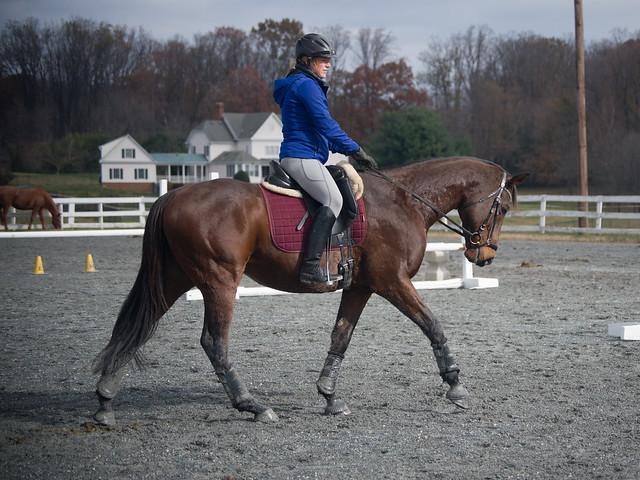20181116 Austen's Ponies_1