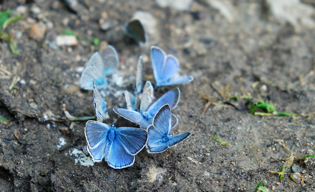 Best Animal Photos Of 2018: Butterflies