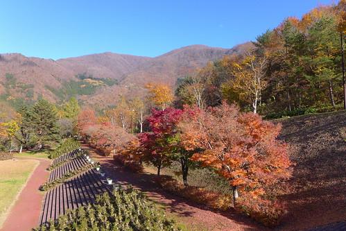 大川ダム公園の紅葉