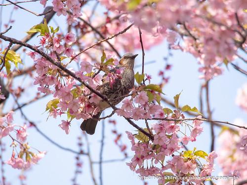 Bird 20190315 #04