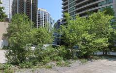 Beautiful trees in North York, Toronto.
