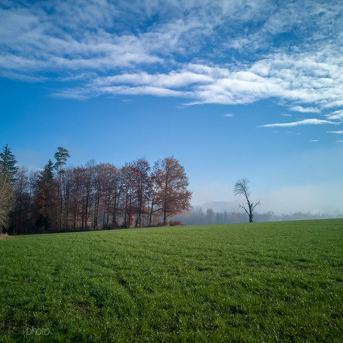 181125_Herbst_Nebel(13)