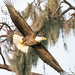 Sony ILCE-A9, Bald Eagle Fly-Out , 00536,  1-1000, f-9, ISO 3200, 560mm   _ by Bill Foxworthy