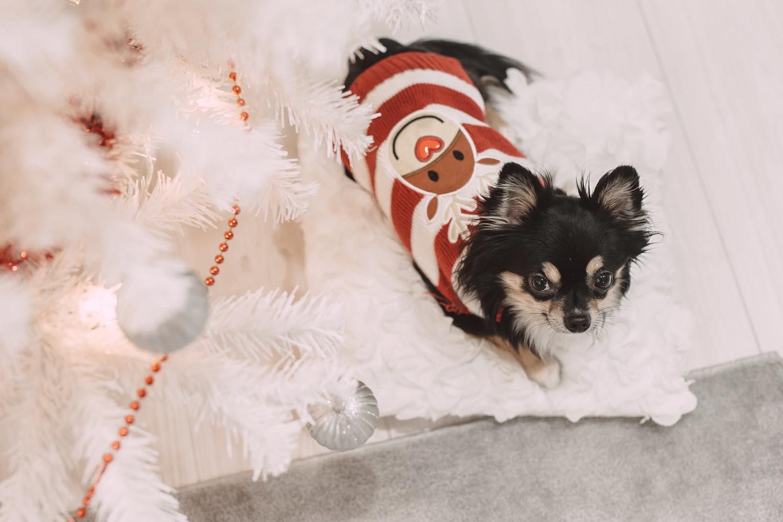 koiran joulupaita