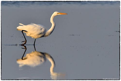 nealpreserve florida raphaelkopanphotography nikon nikkor600f4evr 14xtciii handheld wildlife