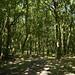 Notton Wood Nature Reserve (100)