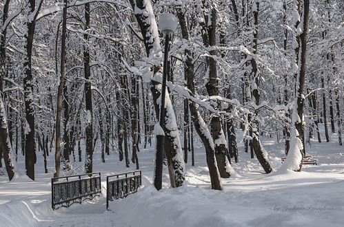 City park in winter