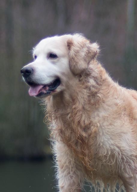 un chien qui sort, Nikon D500, AF Nikkor 50mm f/1.4D