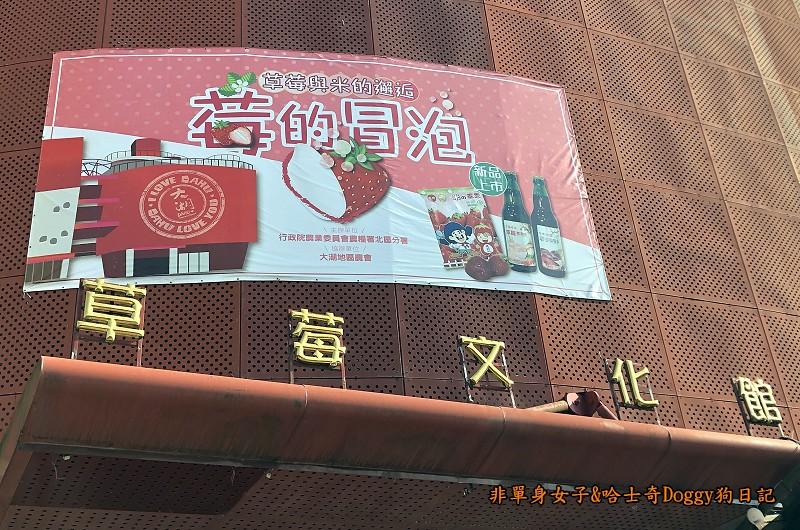 苗栗大湖草莓02