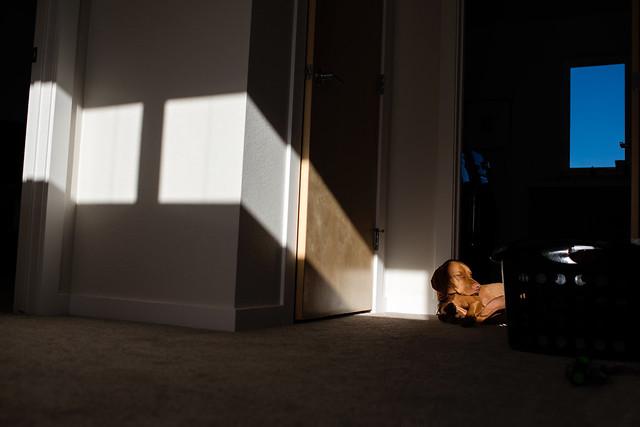 008/365 Sunbeam, Nikon D800, AF-S Nikkor 35mm f/1.4G