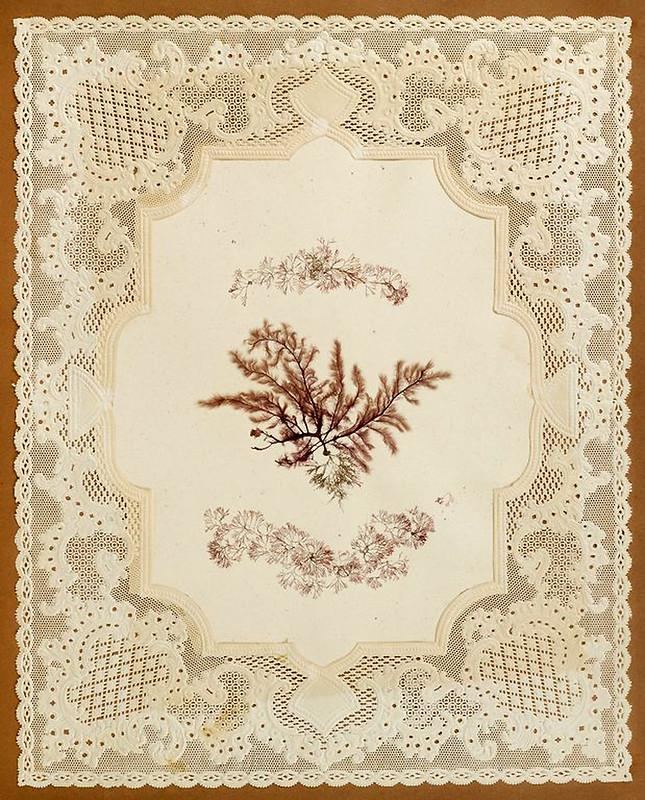 003-Album de algas marinas-1848- Brooklyn Museum Library