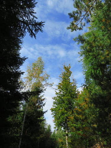 20170930 03 110 ostbay Wolken Herbst Wald Bäume