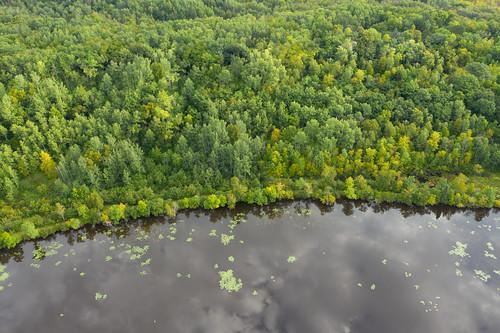 Trees along the Saint Louis River, Minnesota