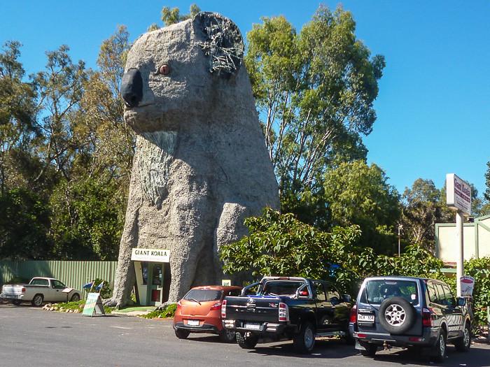 The Big Koala