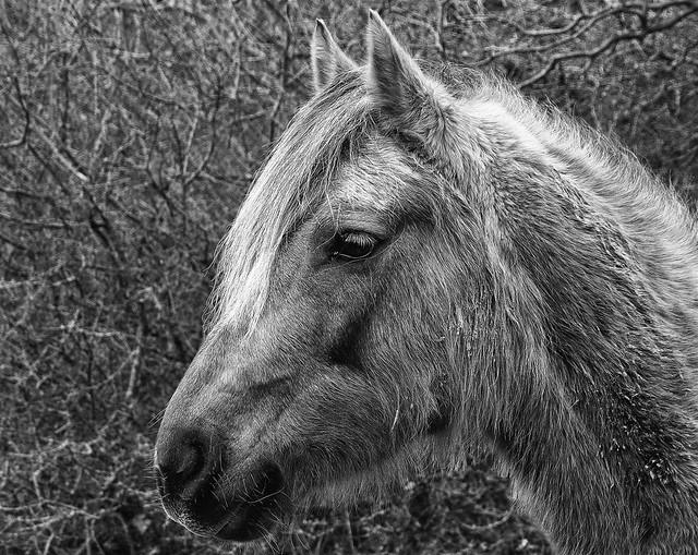 365 - Image 019 - Horse...