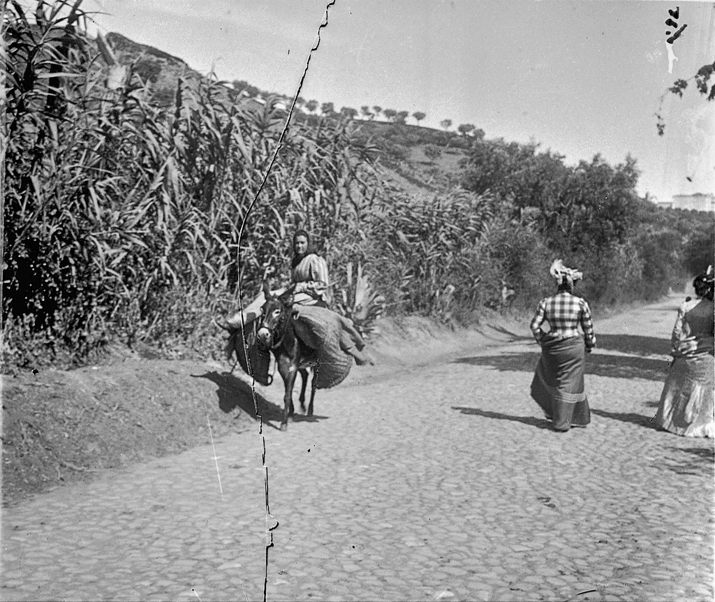 Estrada de Sacavém [?], Areeiro (prox.) [?] (P. Guedes, c. Belle époque))