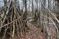 Forest encampment (?), Long Pond Park