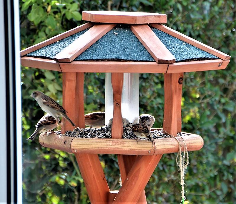Sparrows 06.11 (9)