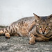 181126 - Cat, Singapore