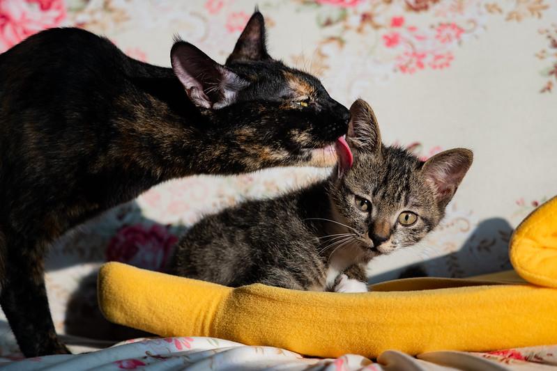大ㄟand小隻ㄟ|Cat