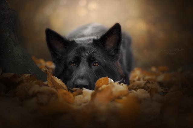Autumn beauty, Nikon D750, AF Nikkor 50mm f/1.8