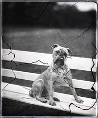 Colman's dog