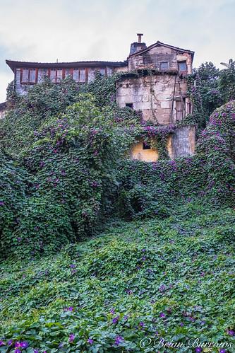 Overgrown house at Entre-os -Rios