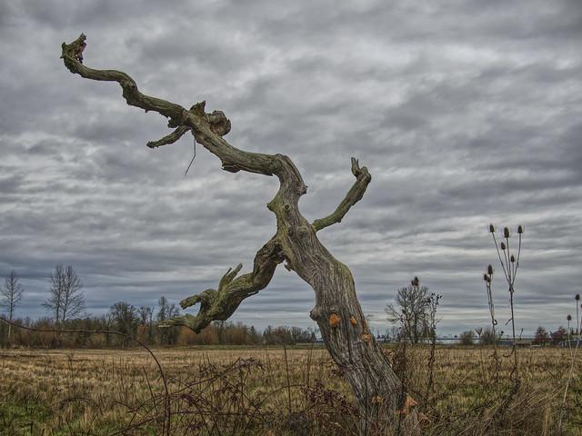 Dead tree, Olympus E-M10MarkII, LUMIX G 20/F1.7 II