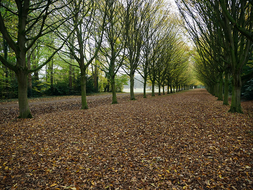 Autumn at Anglesey Abbey