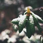 Garden Winter Bokeh - Tarbek - 19. Januar 2015