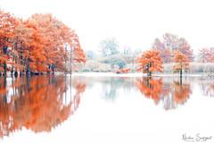 Autumn's Color - HighKey
