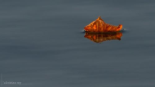 Feuille d'automne sur le lac