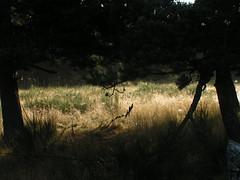20080907 31665 1008 Jakobus Bäume Ginster Wiese - Photo of La Chaze-de-Peyre