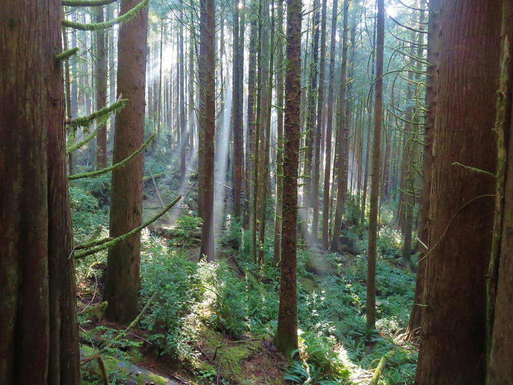 Sunbeams in the Siuslaw National Forest