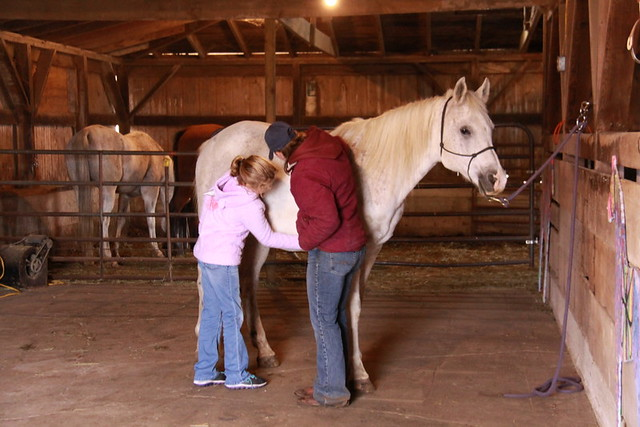 Horse Lessons (5)