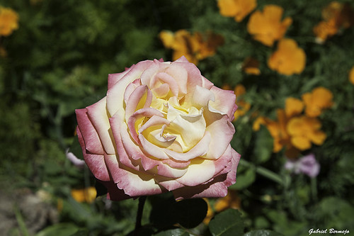 Belleza efimera - Granada