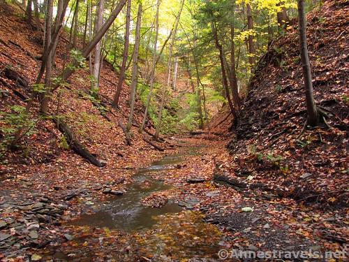 The upper gully isn't as deep as the lower gully of Barnes Creek, Onanda Park near Canandaigua, New York