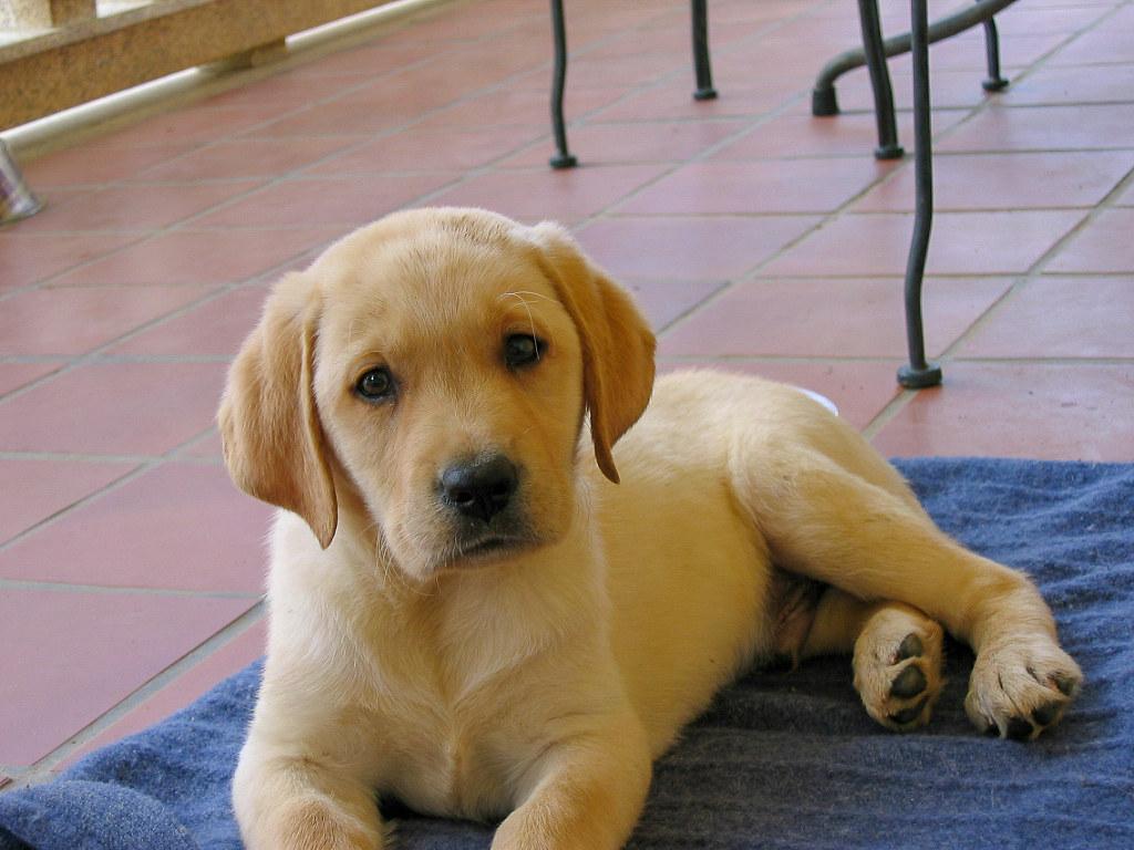 Fotos de animales de todo tipo incluyendo mascotas que más te gustan - Página 14 31376195377_55f10a84f6_b